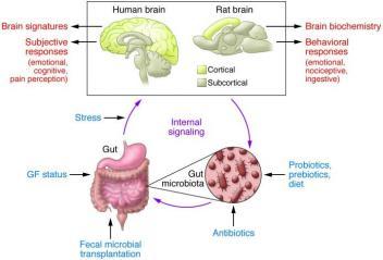 Gut Microbiota And Mental Disorders Www Psychiatryonline It